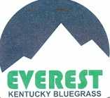 Everest Kentucky bluegrass